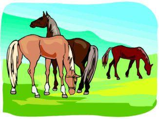 hästar frågesport barn