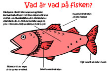vad är vad på fisken