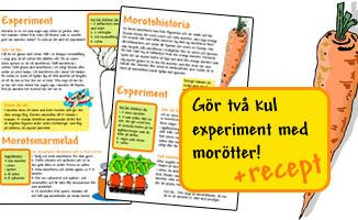 Experiment med morötter