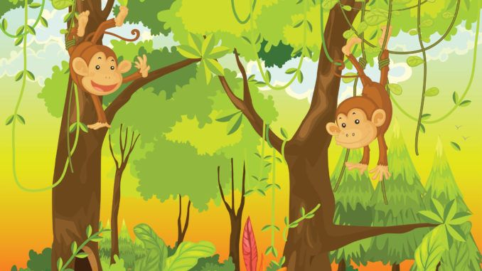 fakta om apor för barn